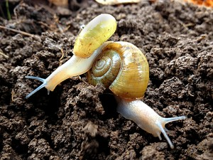 Two snails left and right small