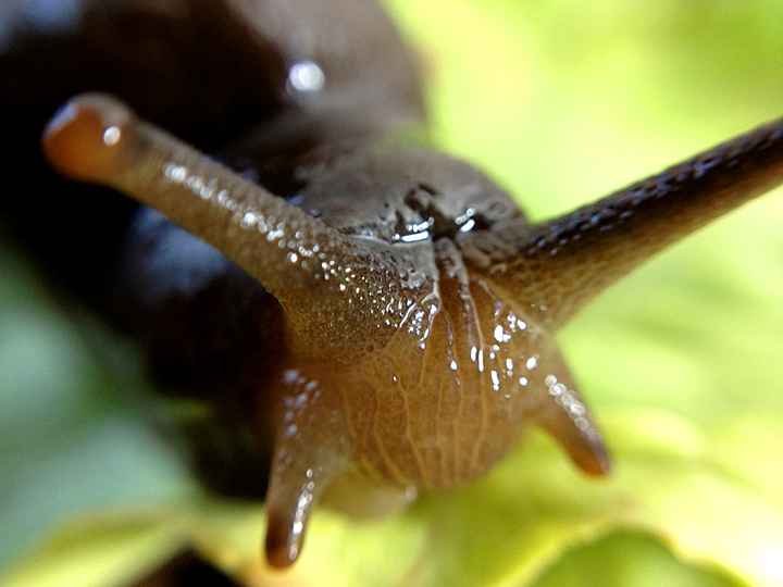 Slug and Snail FAQ\'s