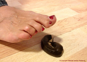 Foot by slug in kitchen